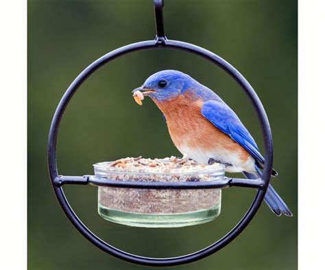 why don t i see any birds at my bird feeder pagosa feed