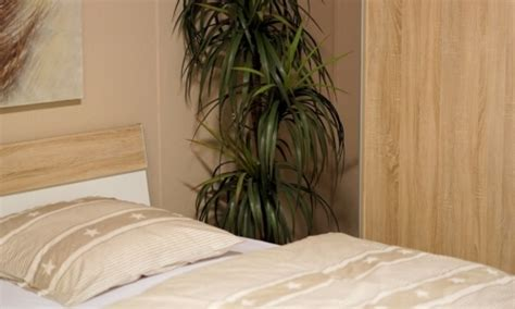 piante da letto piante in da letto quali scegliere per favorire un