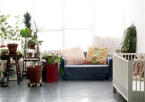 glory home design brooklyn ny 18 best images about plants on pinterest vintage