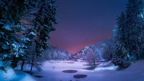 Snowy Winter Forest At Night Wallpaper   Wallpaper Studio