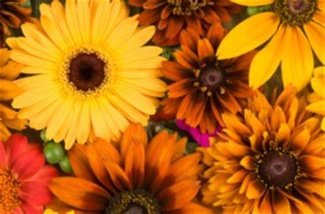 celebrate the fall season with houston flowers elaine s