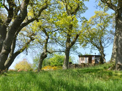 Cabin In The Woods Scotland by Upland Shepherd Huts