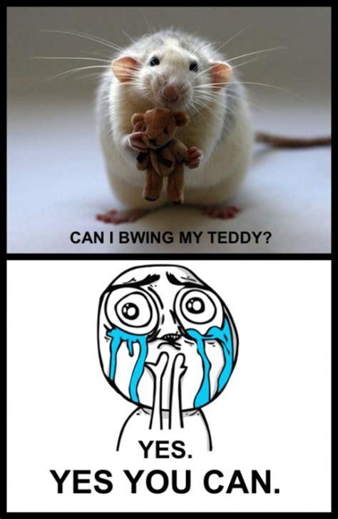 Cute Overload Meme - image 251217 cuteness overload know your meme