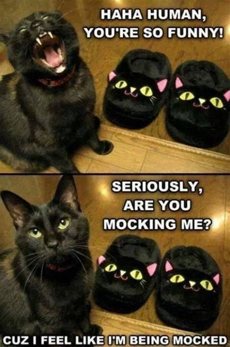 Funny Black Cat Memes - funny cat meme lol jokes memes pictures