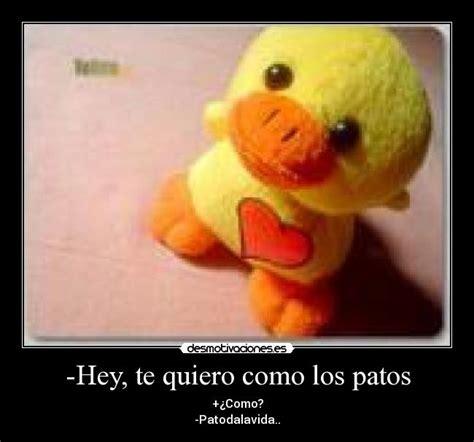 imagenes te quiero como los patos hey te quiero como los patos desmotivaciones