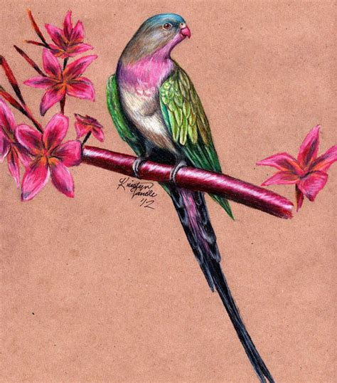 bird art drawing birds 15 bird drawings jpg download