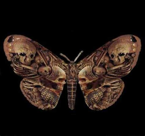 skull moth awesome pinterest skull moth