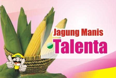 Benih Jagung Manis Talenta jagung manis talenta benih pertiwi