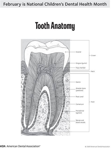 healthy smiles dental health awareness month tooth