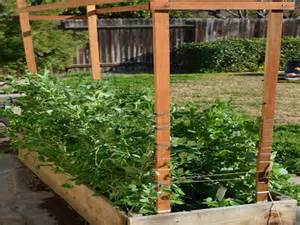 small trellis gardening landscaping how to build a trellis green