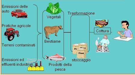 adulterazione alimentare i rischi nella produzione di un alimento il cibo in testa