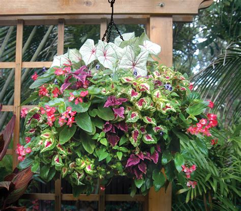 Coleus Planters by Hanging Planter Photo Gallery