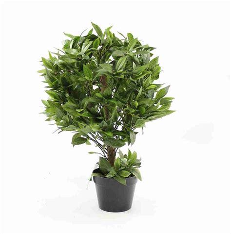 pianta di alloro in vaso fiori e piante ecco alcune fra le specie pi 249 decorative e