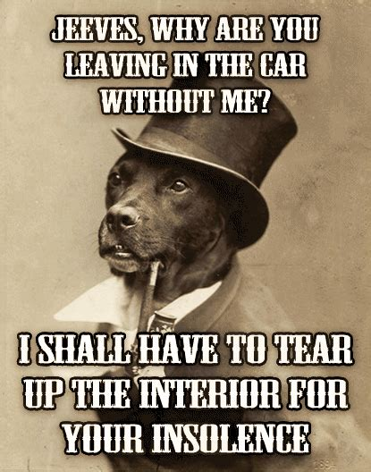 Benson Dog Meme - the gallery for gt old money dog meme