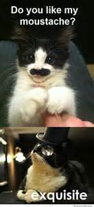 do you like my moustache weknowmemes