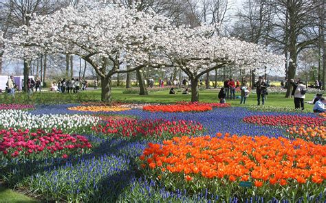 Make Your Life Colorful In The Finest Tulip Garden In The Best Flower Gardens In The World
