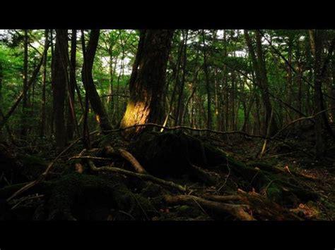libro el bosque de los aokigahara el aterrador quot bosque de los suicidios quot fotos foto 1 de 4 noticia de viajes
