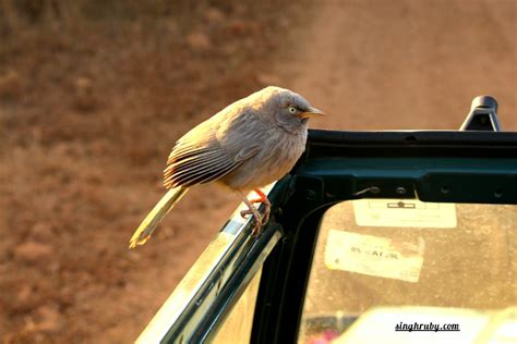 More Than Just Birds Wood by Sariska Tiger Reserve More Than Just Tigers And