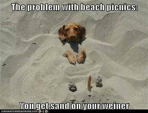 Weiner Dog Meme - weiner dog funny quotes quotesgram
