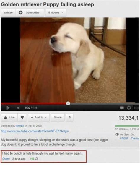 golden retriever puppy falling asleep golden retriever puppy falling asleep chinze subscribe 8 032 1115 like add to
