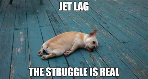Jet Lag Meme - how to combat jet lag thoracic and sleep group queensland