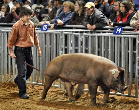 Ephrata boy's Duroc pig gets attention at Farm Show   News