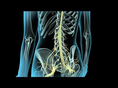 back pain after c section epidural scheduled c section epidural or spinal yahoo answers