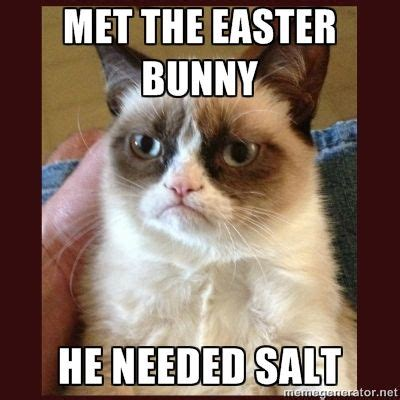 Chocolate Easter Bunny Meme - 17 best images about grumpy cat on pinterest the zombies