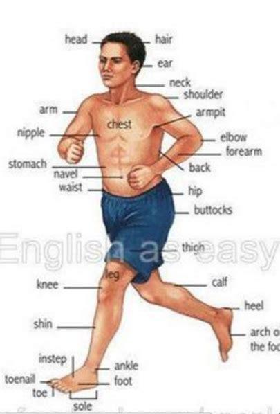 imagenes asombrosas del cuerpo humano imagenes del cuerpo humano en ingles para dibujar