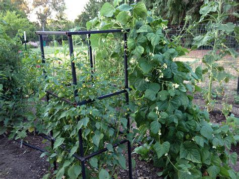 Gardening Green Beans Green Beans Jennifersgarden