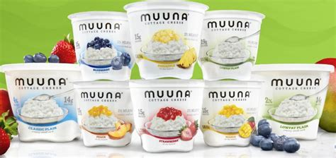 cottage cheese brands israeli dairy company launches u s cottage cheese brand