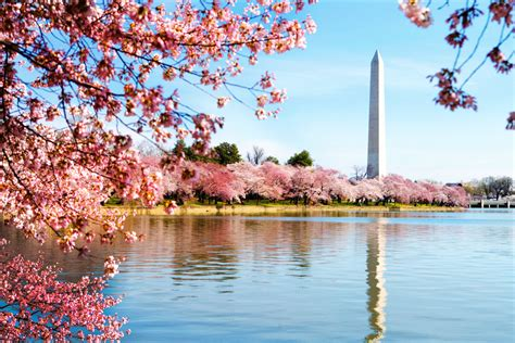 Who To Decorate A Home by Cherry Blossoms Capital Bikeshare Capital Bikeshare