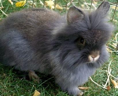 alimentazione coniglio testa di conigli testa di conigli