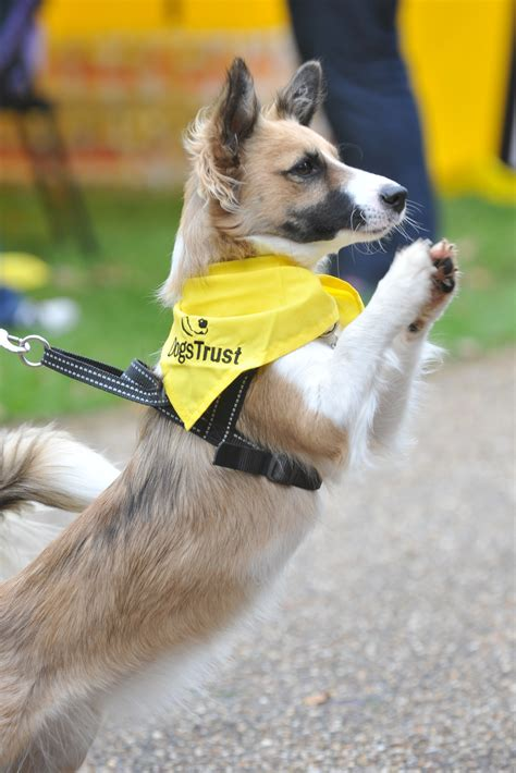 dogs trust dogs trust