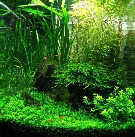 Shrimp Tank Aquascape by Shrimp Guide Check Them Out On