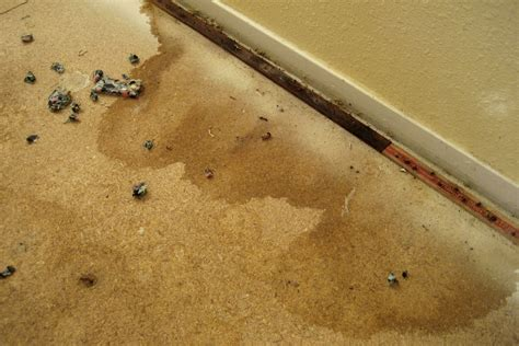 cork flooring and pets urine 28 images top 28 cork