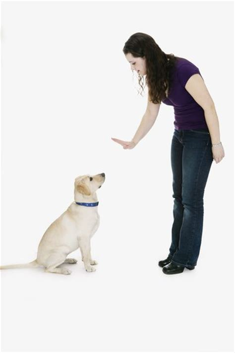 how to your puppy to sit signals for a puppy to speak to sit care the daily puppy