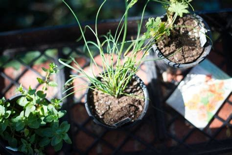Vegetables To Plant Now Texas Farm Bureau Insurance Blog What To Plant In Vegetable Garden Now