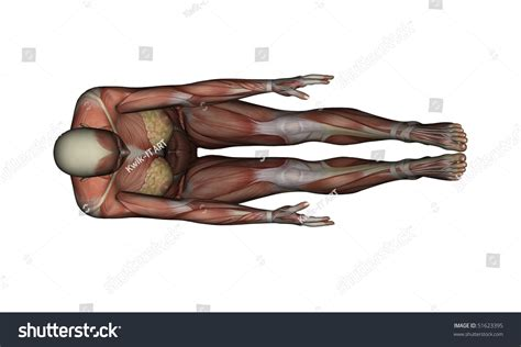 boat pose pic yoga full boat pose female muscles top view stock