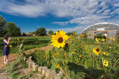 farm to table albuquerque 20 things to do in albuquerque finding the universe