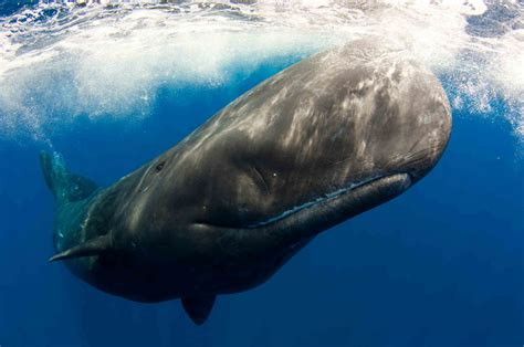 Whale L by Whale The Animals Kingdom