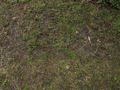 as ground free green nature ground texture photo gallery