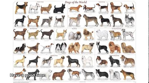 breeds list with pictures cutest breeds list images small with pictures litle pups