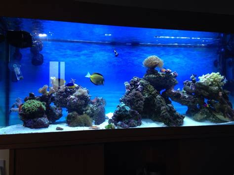 live rock aquascape 1000 images about reef tank on pinterest saltwater aquarium saltwater tank and
