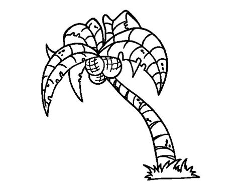 coconut palm tree coloring page coloringcrew com