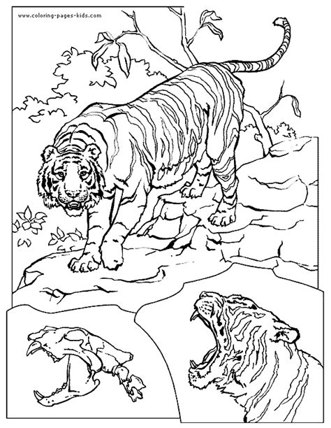 coloring pages lions tigers tigers coloring page