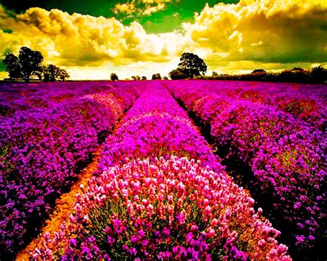 imagenes de flores naturales gratis fotografias paisajes de colores fotografias y fotos para
