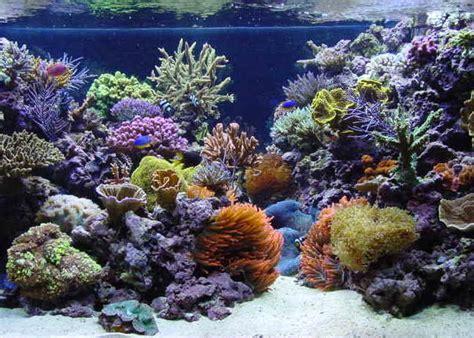 Paket Reff Mini ikanhias info akuarium air laut