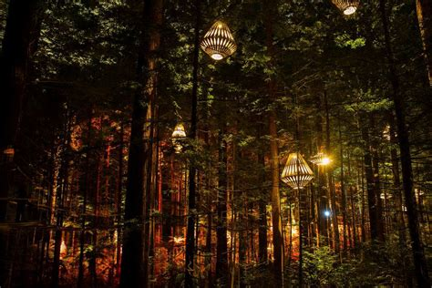 lighting     deep dark forest designcurial