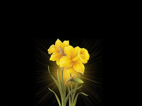 black wallpaper with yellow flowers free wallpaper of black flowers 7 widescreen wallpaper